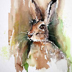 the hare my friend (7) / Aquarell 23x31cm