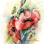 Papaver-I (1) / Watercolour 30x40cm
