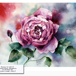 Rose IV 2017 / Watercolour 30x40cm on Arches CP © janinaB. 2017