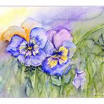 Viola (O2) / Watercolour 18x24cm  © janinaB.