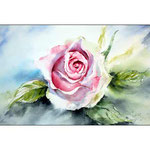 pink rose (O2) / Watercolour 20x31cm