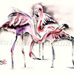 flamingos (O1) / Watercolour 18x25cm