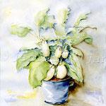 weiße-Auberginen-(4) / Watercolour 30x40cm