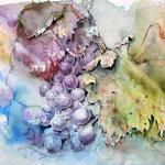 Weintrauben-(4) / Watercolour 30x40cm