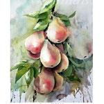 Pears II 2018 (20) / 30x40cm Watercolour by ©janinaB.