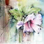 Hibiskus (18) / Watercolour 30x40cm / insp. Fabio Cembranelli