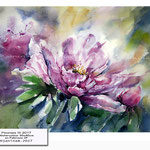 Peonies III 2017 (9) / Watercolour 30x40cm on Fabriano CP © janinaB. 2017