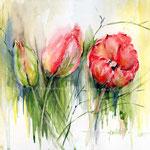 rote-Tulpen-(1) / Watercolour 30x40cm