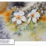 Wild Roses I 2017 / Watercolour 30x40cm on Fabriano CP © janinaB. 2017