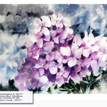 Hydrangea X 2017 (9) / Watercolour 30x40cm on Arches CP OD © janinaB. 2017