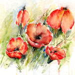 Poppies- (1) / Watercolour 30x40cm
