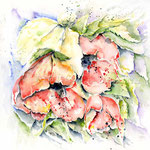 Poppies II 2010 (8) / Watercolour 25x25cm  © janinaB.