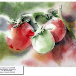 Tomatoes II 2017 / Watercolour 15x20cm on Arches CP © janinaB. 2017