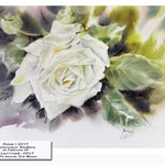 Rose I 2017 / Watercolour 30x40cm on Fabriano CP © janinaB. 2017