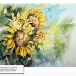 Sunflowers VI 2017 (20) / Watercolour 30x40cm © janinaB. 2017