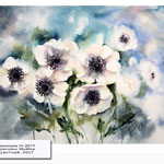 Anemones IV 2017 (21) / Watercolour 30x40cm © janinaB. 2017