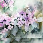 Hydrangea V 2018 (21) / 30x40cm Watercolour by ©janinaB.