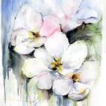 Apfelblüte I (1) / Watercolour 30x40cm