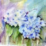Blue Hydrangeas (5) / Watercolour 30x40cm