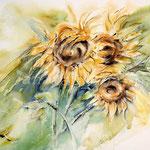 Sonnenblumen I 2012 (8) / Watercolour 30x40cm