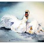 der Schwan (25) / Watercolour 23x31cm
