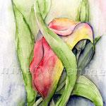 Calla (O1) / Watercolour 17x24cm  © janinaB.
