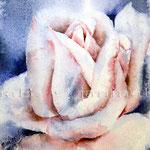 gewischte Rose (O3) / Watercolour 12x16cm