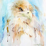 Adler (7) / Watercolour 24x32cm