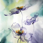 Anemonen (15) / Watercolour 26x35cm