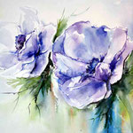 Anemonen (18) / Watercolour 23x30cm