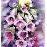 Foxglove I 2017 (O1) / Watercolour 20x30cm on Fabriano CP © janinaB. 2017