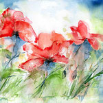 Mohn III 2011 (8) / Watercolour 30x40cm