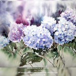 Hydrangea I 2018 / 56x76cm (M1) / Watercolour on Canson Heritage by ©janinaB.