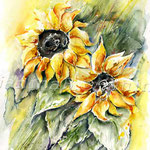 Sunflowers-I-2010-(6) / Watercolour 30x40cm  © janinaB.