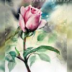 Rose I 2018 (21) / 30x40cm Watercolour by ©janinaB. Photo source: Malgorzata Matyjasiak