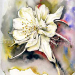 weiße Blüte (18) / Watercolour 24x32cm  © janinaB.