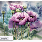 Poppies IV 2017 / Watercolour 30x40cm on Arches CP © janinaB. 2017