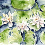 Seerosen II 2010 (12) / Watercolour 24x32cm  © janinaB.