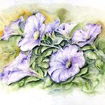 Petunien (17) / Watercolour 30x40cm  © janinaB.