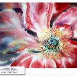 Poppy I 2017 / Watercolour 30x40cm on Arches CP © janinaB. 2017