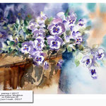 pansy I 2017 (14) / Watercolour 30x40cm on Fabriano CP © janinaB. 2017