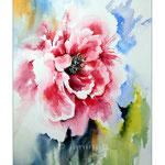 Pfingstrose / Watercolour 30x40cm