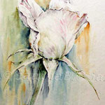 Rose I 2011 (10) / Watercolour 30x40cm
