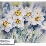 daffodils II 2017 (21) / Watercolour 30x40cm on Arches CP © janinaB. 2017