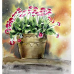 daisies I 2017 / Watercolour 30x40cm on Arches CP © janinaB. 2017
