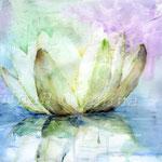 Wasserlilie (5)  / Watercolour 24x34cm