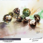 chestnuts I / Watercolour 30x40cm on Fabriano CP © janinaB. 2016