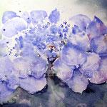 Blaue Hortensie (O1) / Watercolour 18x25cm