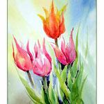 Tulpen-Aquarellskizziert (18) / Watercolour 24x34cm