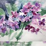 Hydrangea III 2018 (21) / 30x40cm Watercolour by ©janinaB.